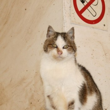 Ein Foto von einer weißen Katze mit braunen Flecken.
