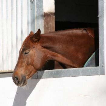Ein Foto von einem braunen Pferd.