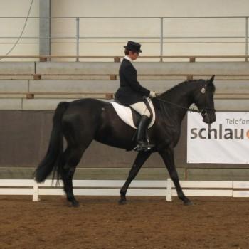 Ein Foto von einer Reiterin auf einem schwarzen Pferd bei der Dressur in einer Reithalle.