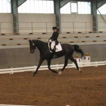 Ein Foto von einer Reiterin auf einem dunkelbraunen Pferd bei der Dressur in einer Reithalle.