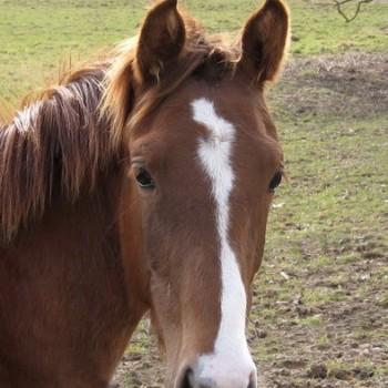 Ein Foto von einem braunen Pferd in der Natur.