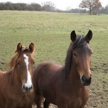 Ein Foto von den beiden Pferden Emma und Giselle in der Naur.