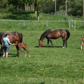 Ein Foto von zwei braunen Pferden mit ihren beiden Fohlen in der Natur.