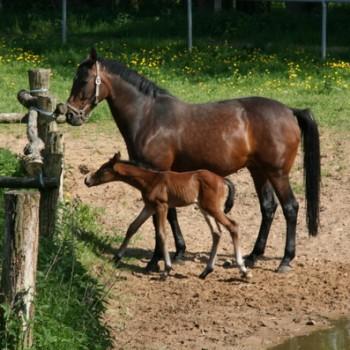 Ein Foto von einem braunen Pferd mit Fohlen in der Natur.
