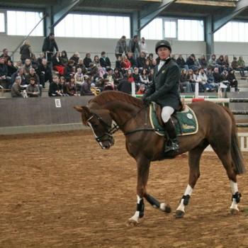 Ein Foto von einem Mann auf einem braunen Pferd in einer Reithalle. Im Hintergrund sind Zuschauer zu erkennen.